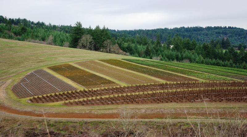 Закона за собствеността и ползването на земеделски земи